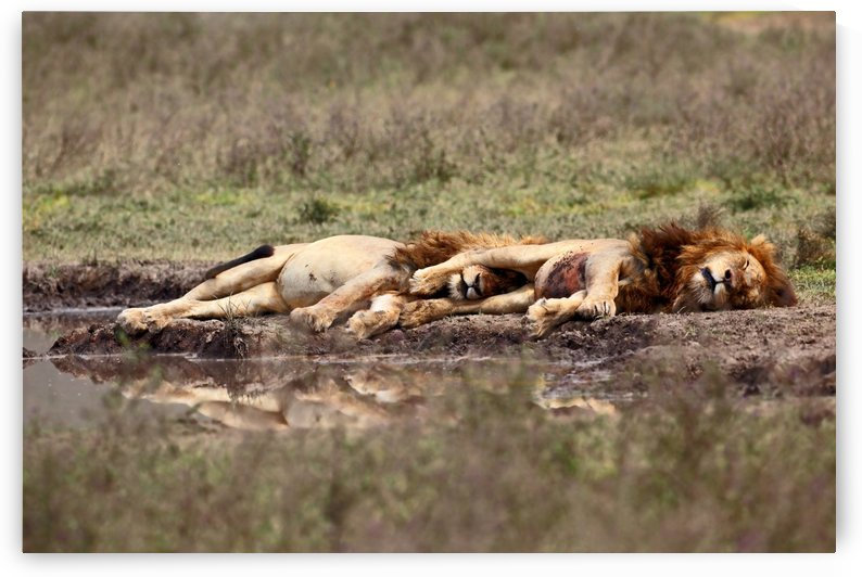 Warriors at rest by 1x