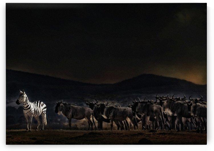 an evening in Kenya by 1x