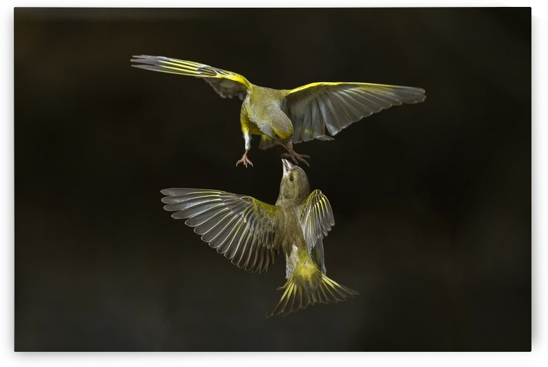 Flying attack! by 1x