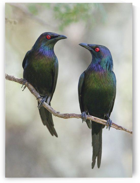 Beautiful Couple by 1x