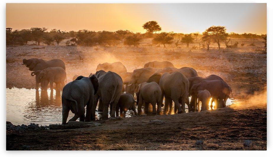 Elephant huddle by 1x