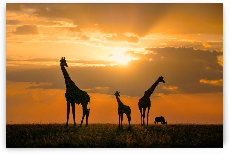 Golden Africa by 1x