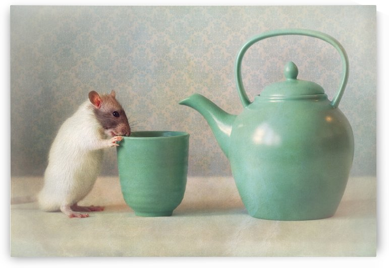 The Teapot by 1x