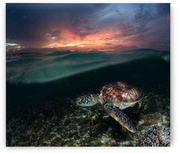 Sunset swim by 1x