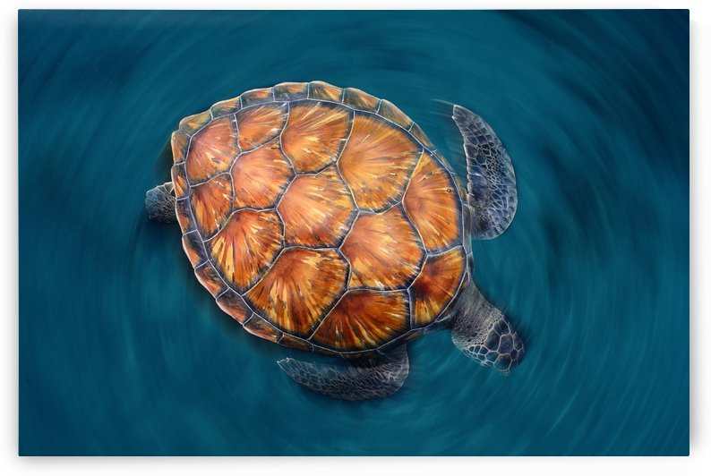spin turtle by 1x