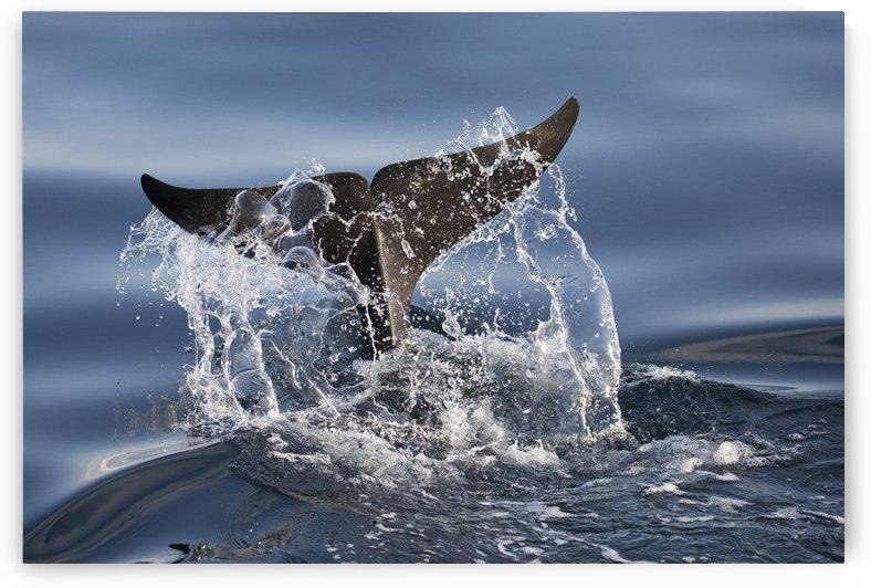 Splash by 1x