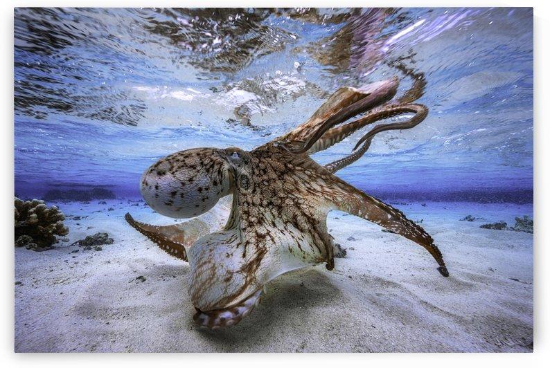 Dancing Octopus by 1x