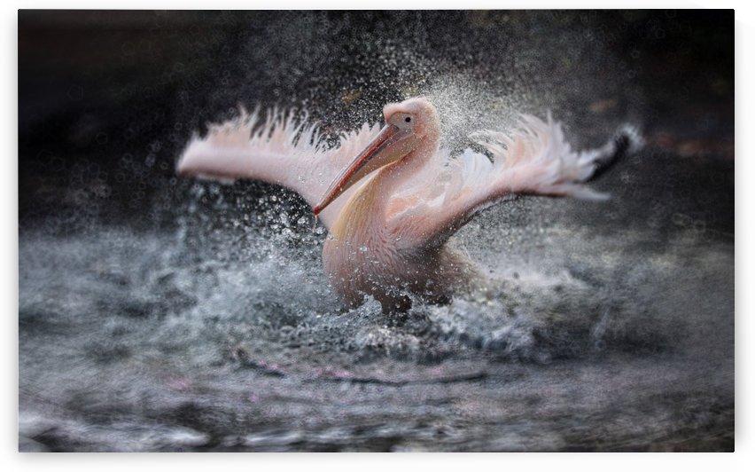 BATHING FUN ..... by 1x