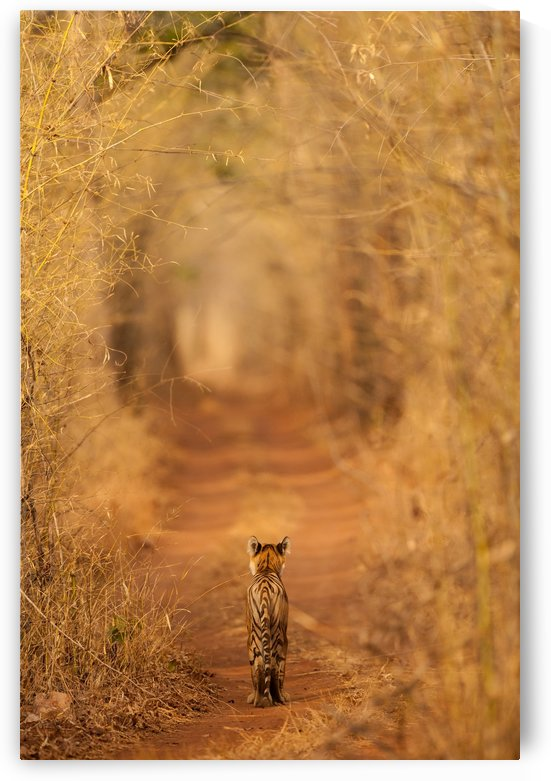 The Tiger in  the Tunnel by 1x