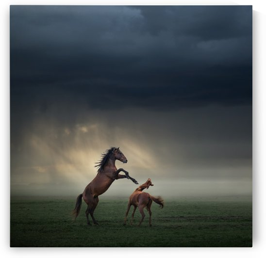 Horses Fight by 1x