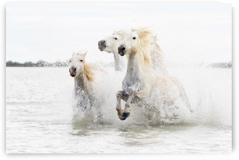 Horses  hight key by 1x