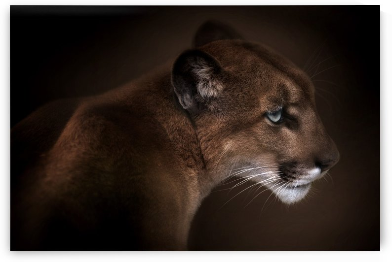 Puma by 1x