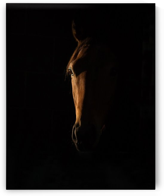The Beauty of The Thoroughbred by 1x