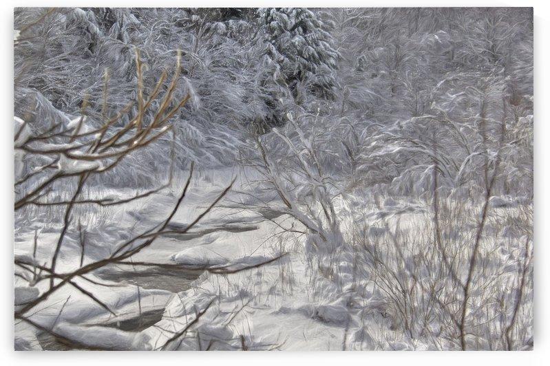 ruisseau branché by Denis Brien