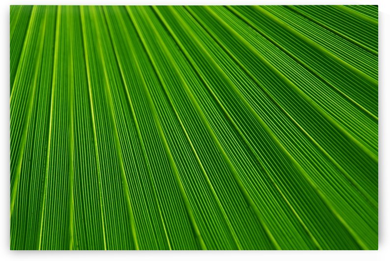 abstract green lines by STOCK PHOTOGRAPHY
