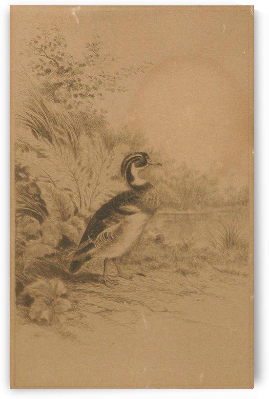 A solitary duck by William de la Montagne Cary