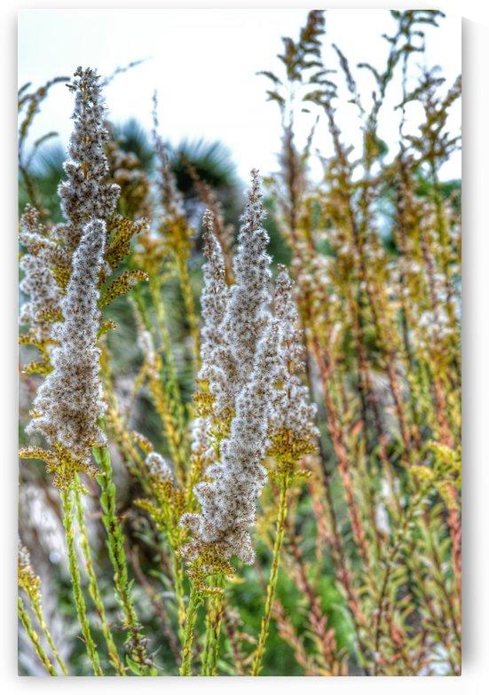 Snowy White Plant by Digitalu Photography
