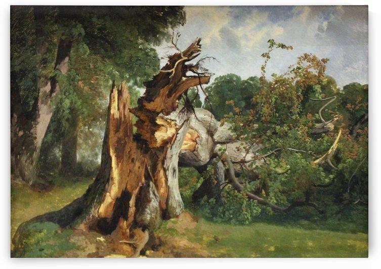 Etude de tronc d'arbre by Alexandre Calame
