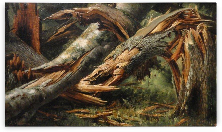 Fallen tree by Alexandre Calame