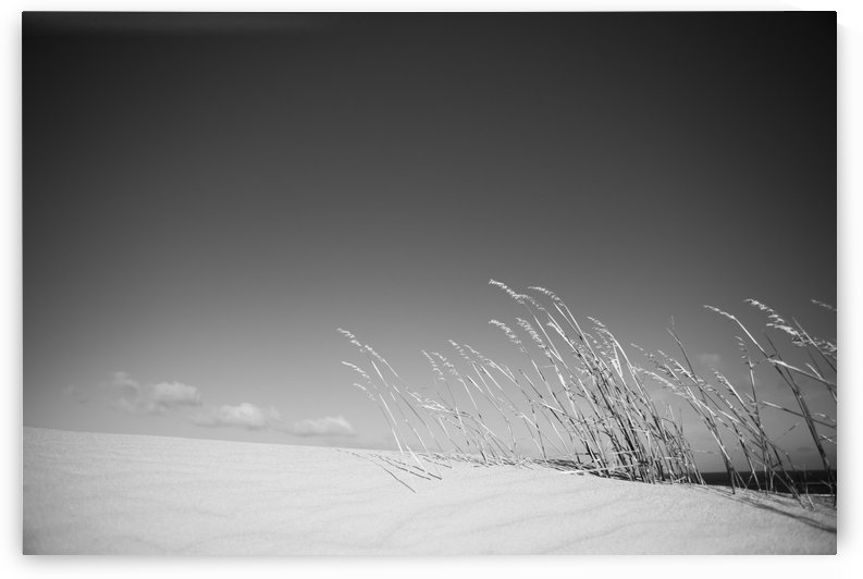Dune Grass by Jacques Jacobsz