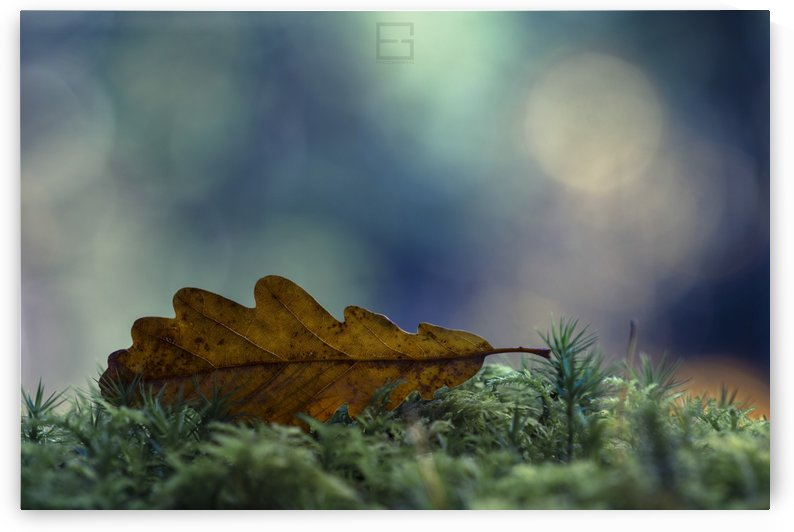 leaf by Emilien Gass