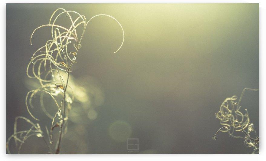 Macro by Emilien Gass