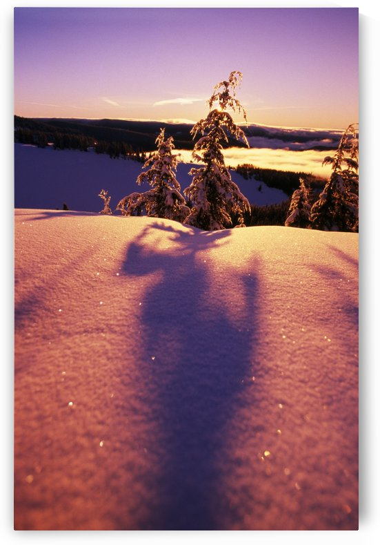 Sun Casting Shadows On Snow Covered Trees by PacificStock