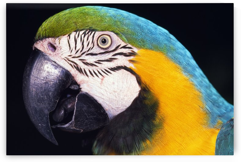 Parrot by PacificStock