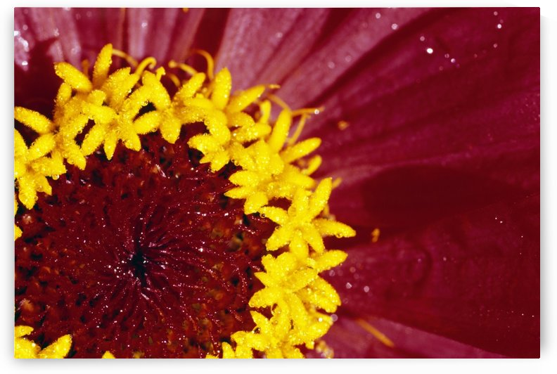 Detail Of The Inside Of A Flower by PacificStock
