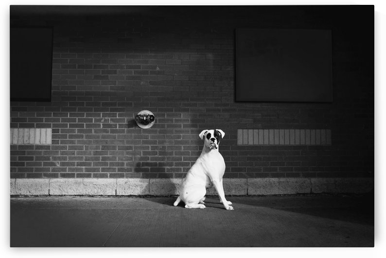 Alert Dog by PacificStock