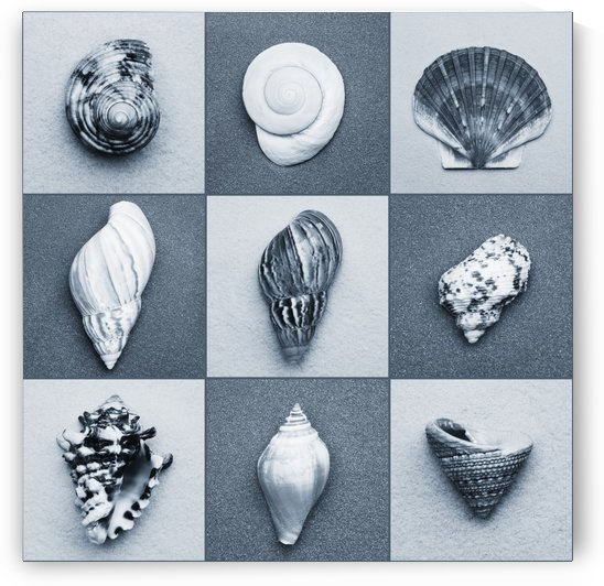Seashell Composite by PacificStock
