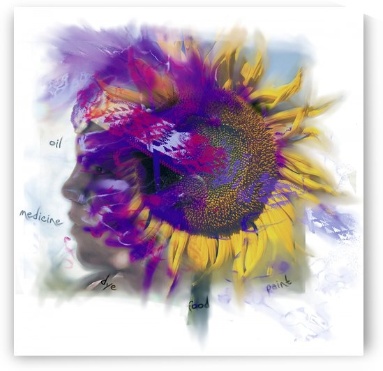 Sunflower Composite by PacificStock
