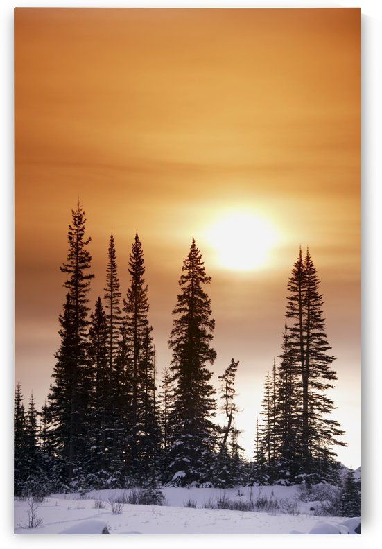 Sun Shining On Trees by PacificStock