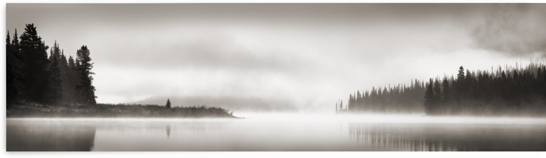 Foggy Scene by PacificStock