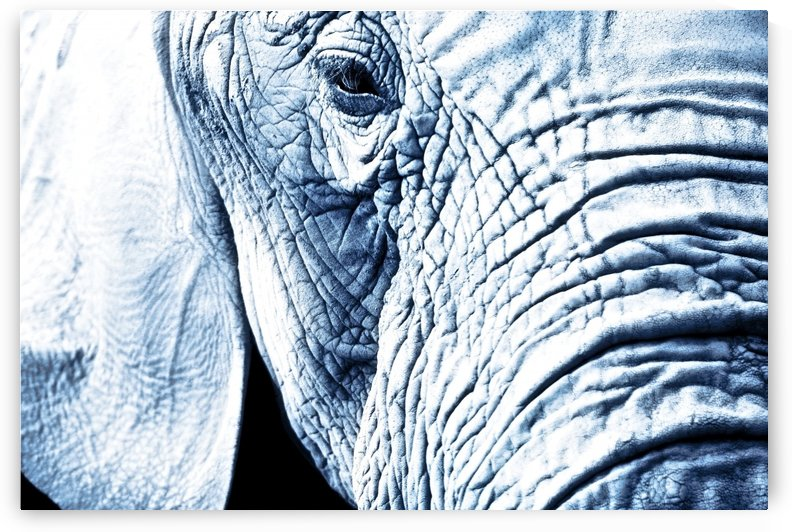 Close Up Of An Elephant's Face by PacificStock