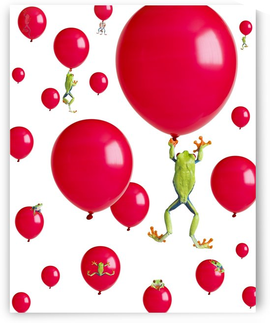 Red-Eyed Treefrogs Floating On Red Balloons by PacificStock