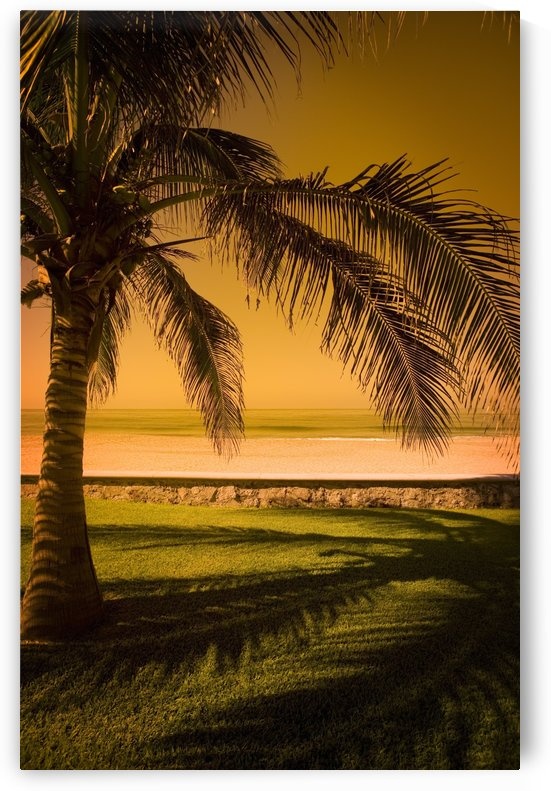 Palm Tree In Mazatlan, Mexico by PacificStock