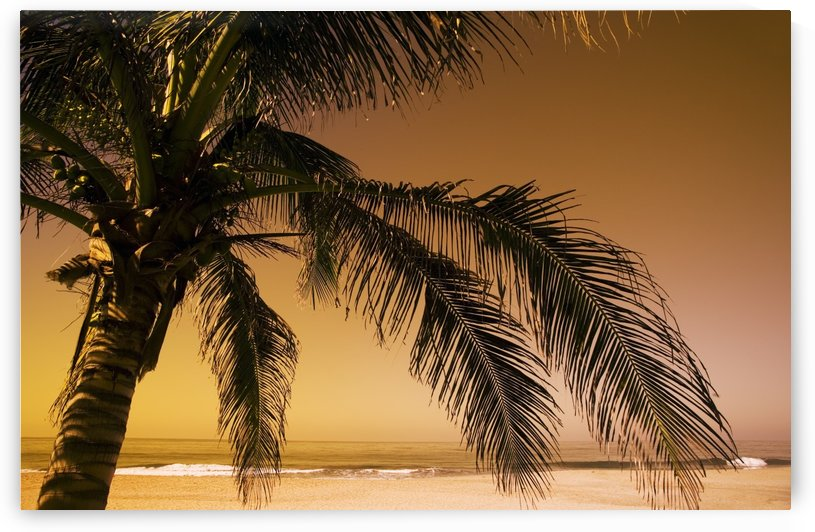 Palm Tree And Sunset In Mexico by PacificStock
