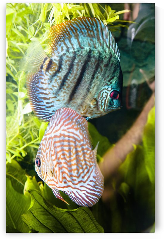 Tropical Fish by PacificStock