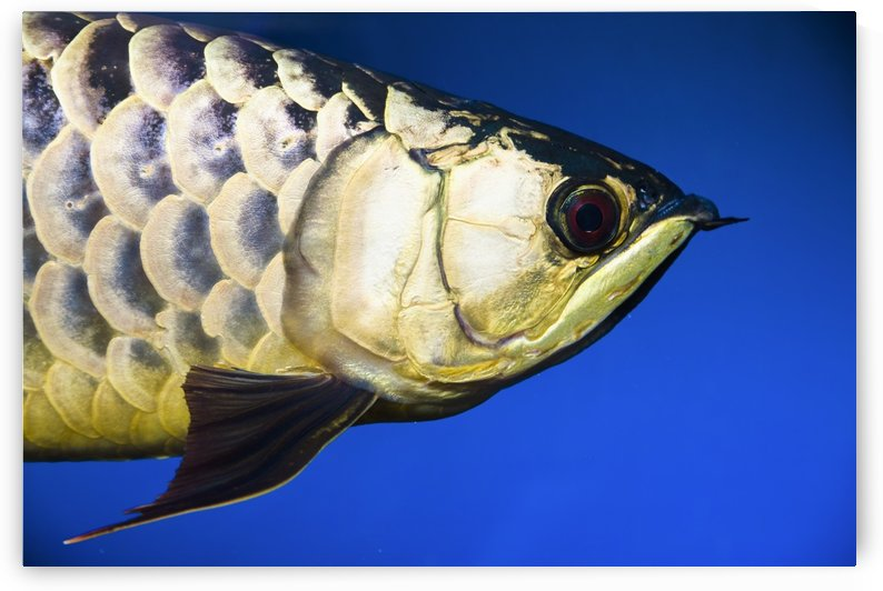 Closeup Of A Fish by PacificStock