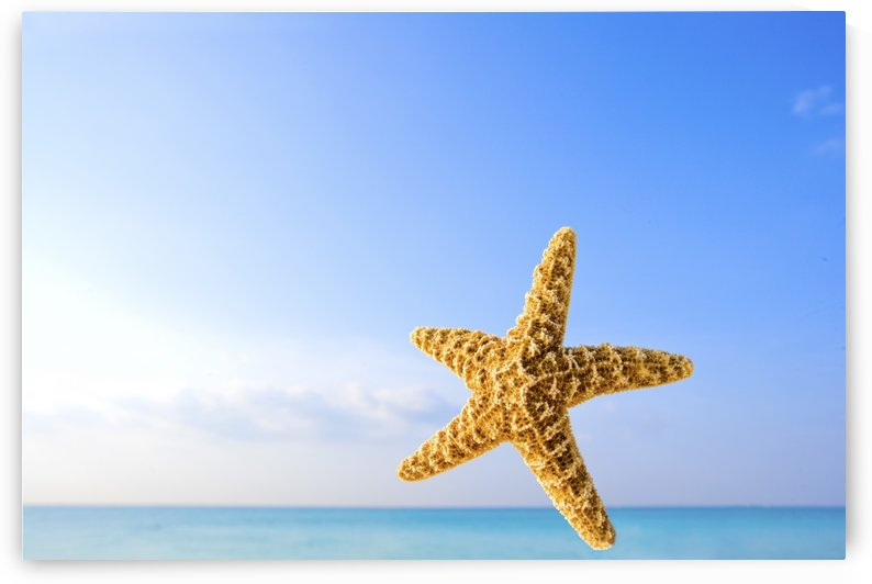 Starfish In Front Of The Ocean by PacificStock