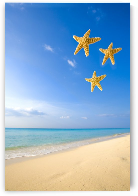 Starfish Falling In Front Of The Ocean by PacificStock