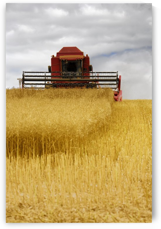 Combine Harvester, North Yorkshire, England by PacificStock