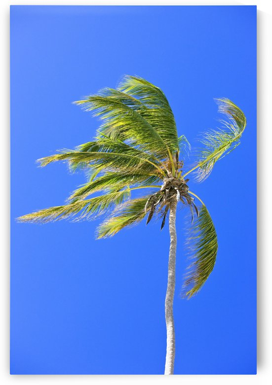 Palm Tree Against Clear Blue Sky by PacificStock