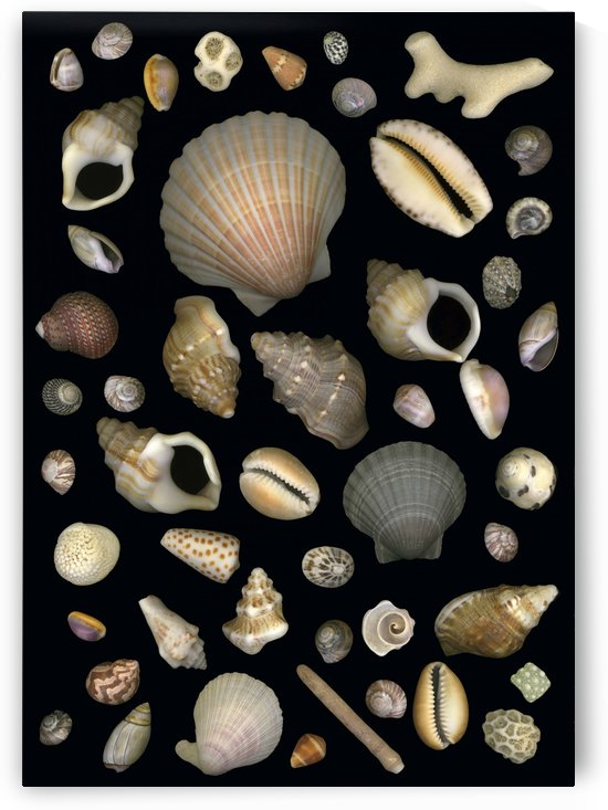Various Sea Shells by PacificStock
