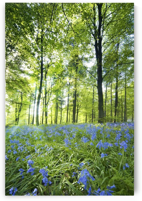 Wildflowers In A Forest Of Trees, Yorkshire, England by PacificStock