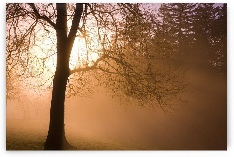Sunrise, Happy Valley, Oregon, Usa by PacificStock