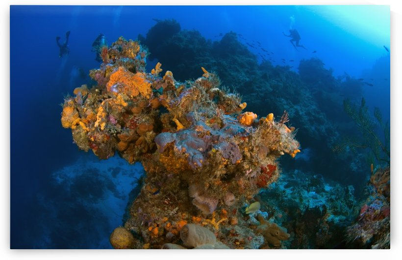 Corals And Sponges, Cozumel, Mexico by PacificStock