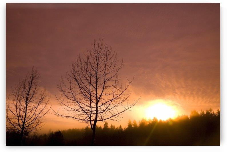 Happy Valley, Oregon, Usa by PacificStock