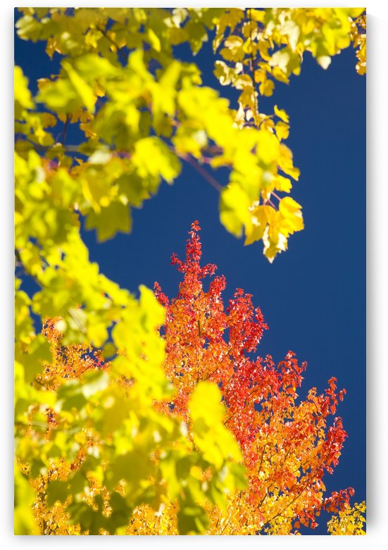 Autumn Trees by PacificStock